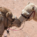 15-Jordan 2017-Wadi Rum-096